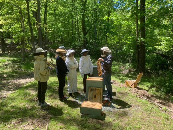 Bee Project 2019 2web