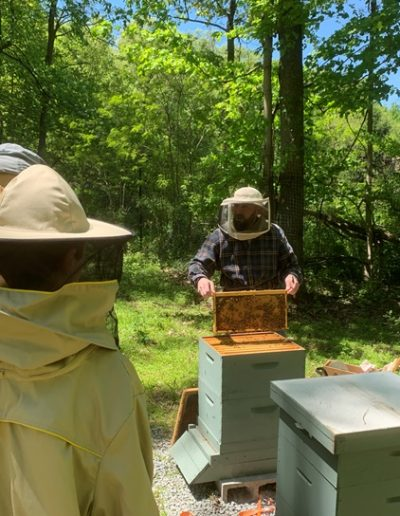 Bee Project 2019 4 web
